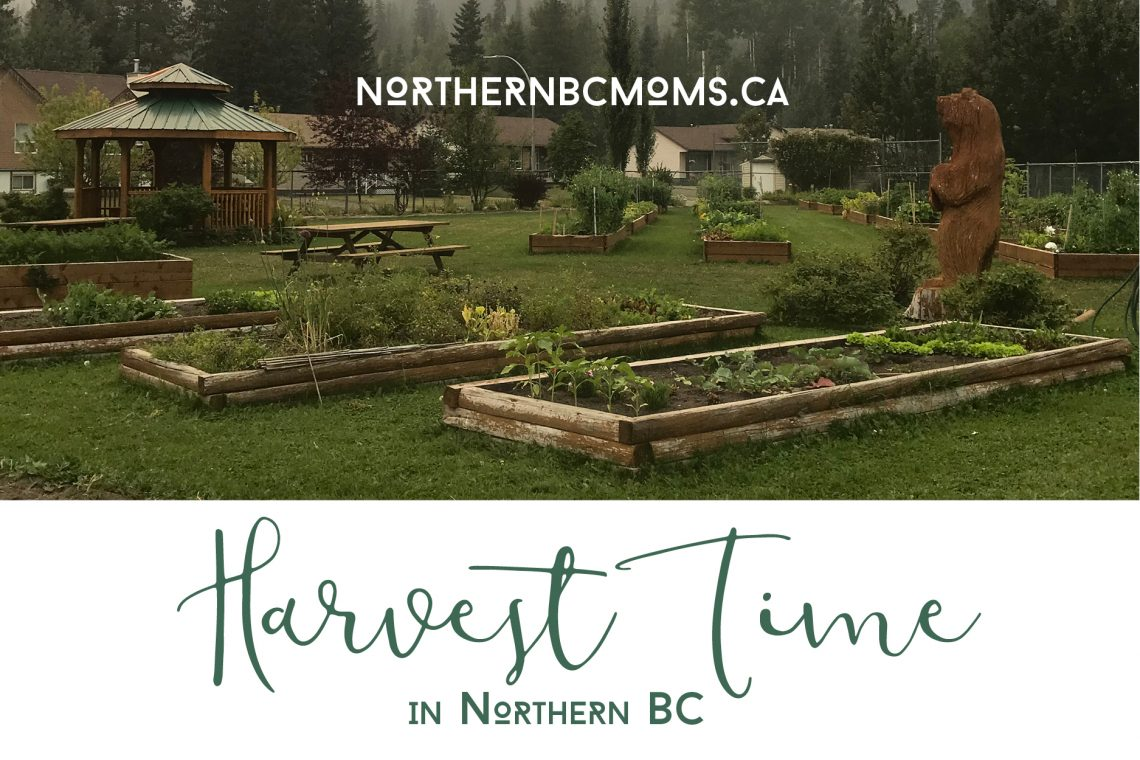 Harvest Time in Northern BC - Northern BC Moms
