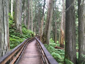 Ancient Forests - Daytrips from Prince George