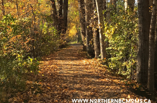 Fall in Northern BC with Kids